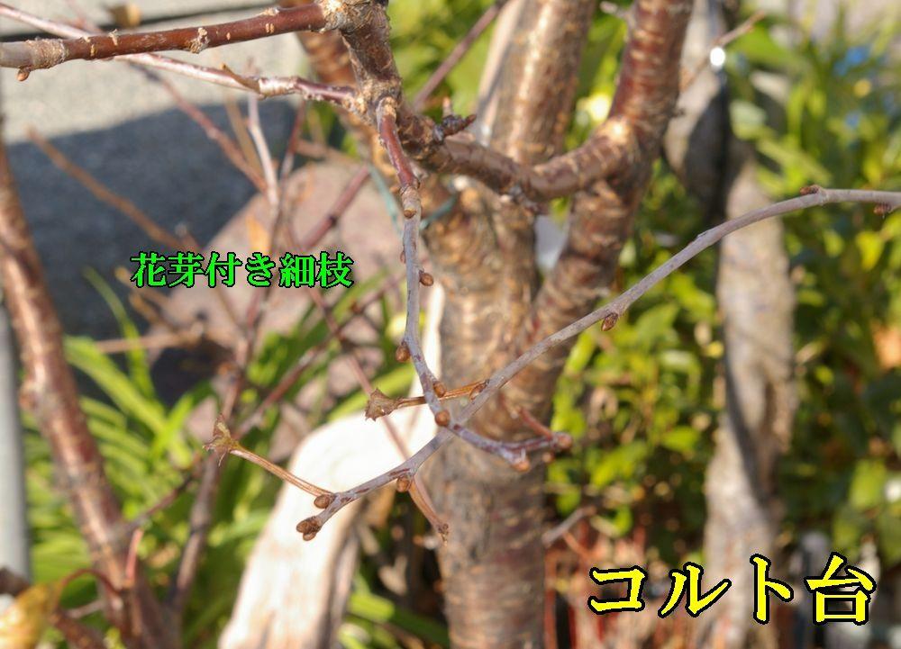 1C_sanka1227c2.jpg