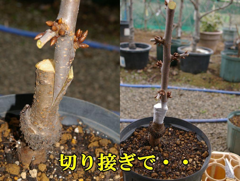 1C_sasikomi0126c3.jpg