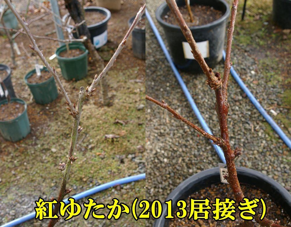 1D_beniyu0107c2.jpg