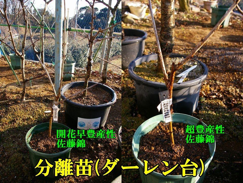 1D_kaikah0104c2.jpg