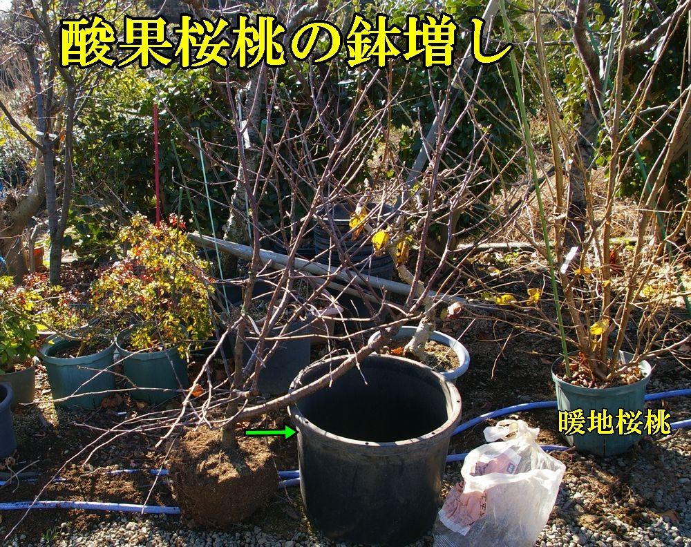 1D_sanka1227c1.jpg