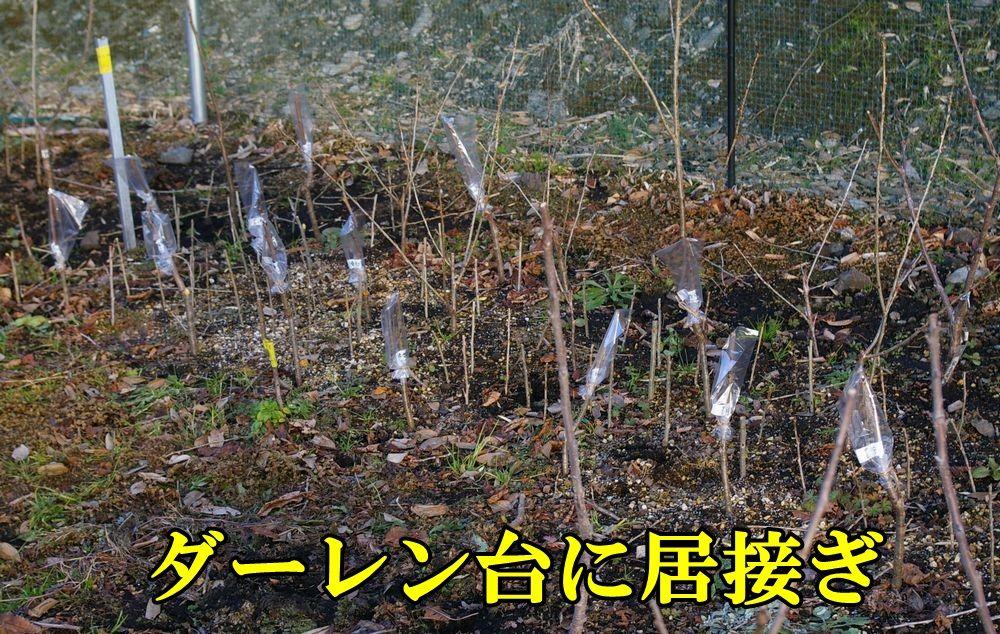 1Da_itugi0117c1.jpg