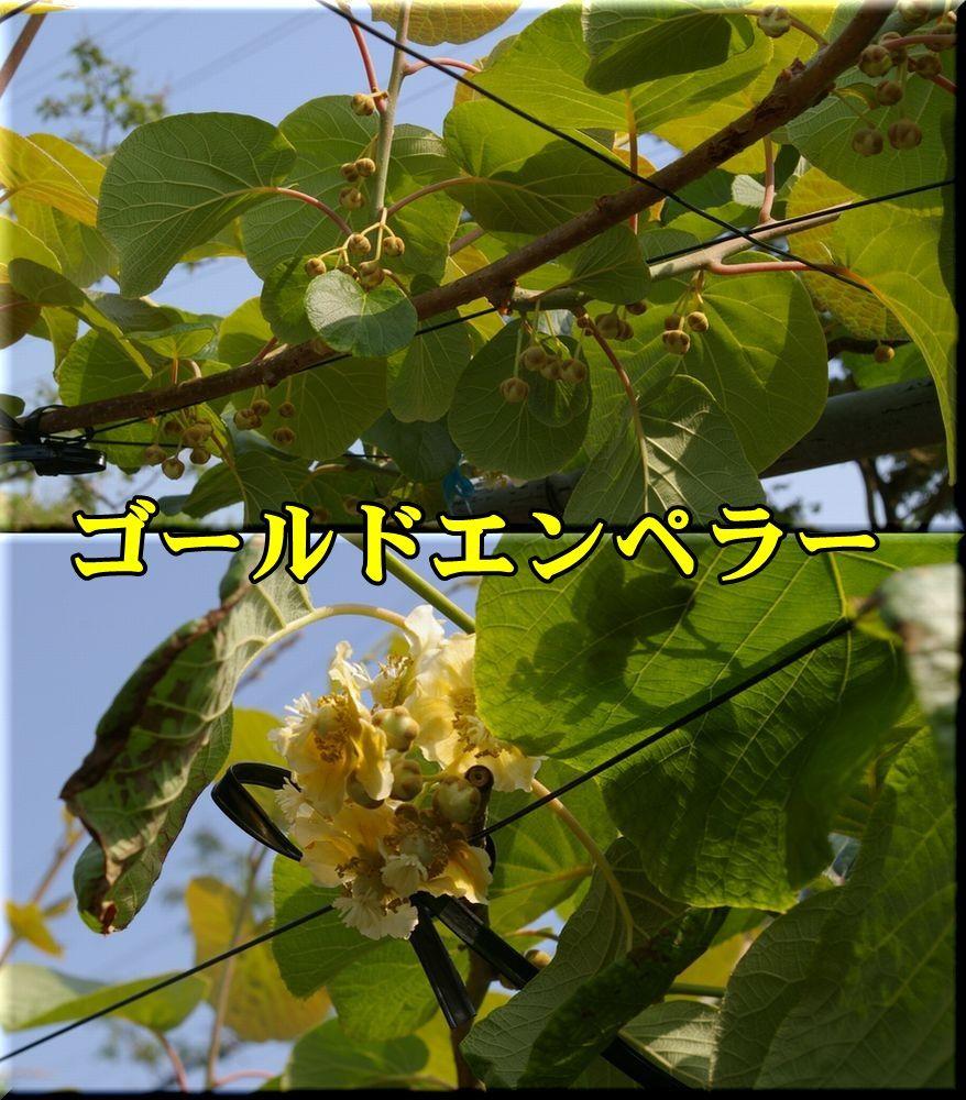 1GEMP150510_008.jpg