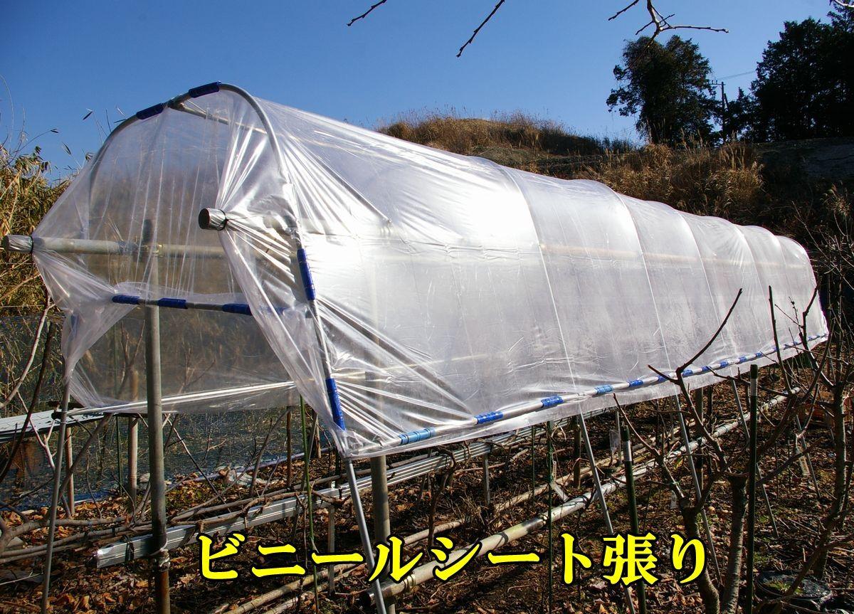 1G_ameyoke0203c1.jpg