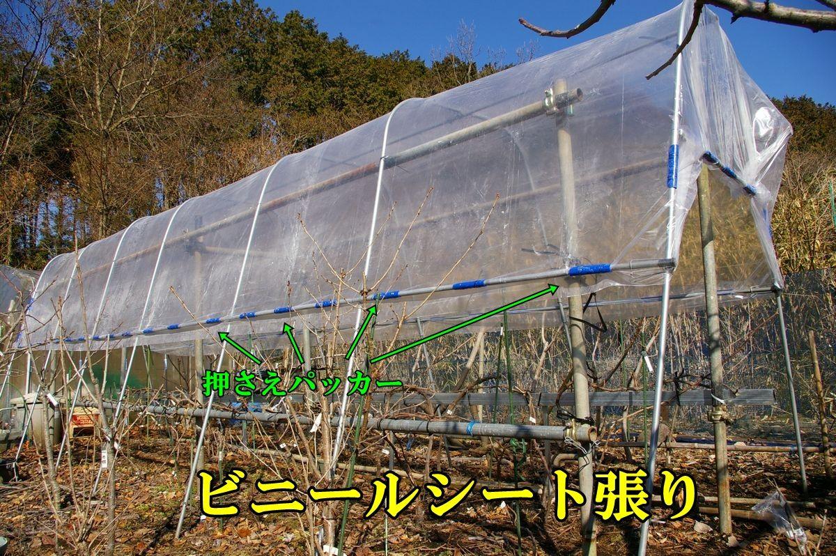 1G_ameyoke0203c2.jpg