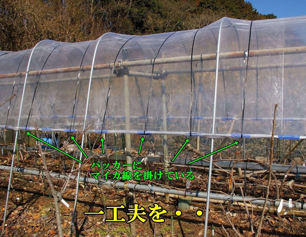 1G_ameyoke0203c5.jpg