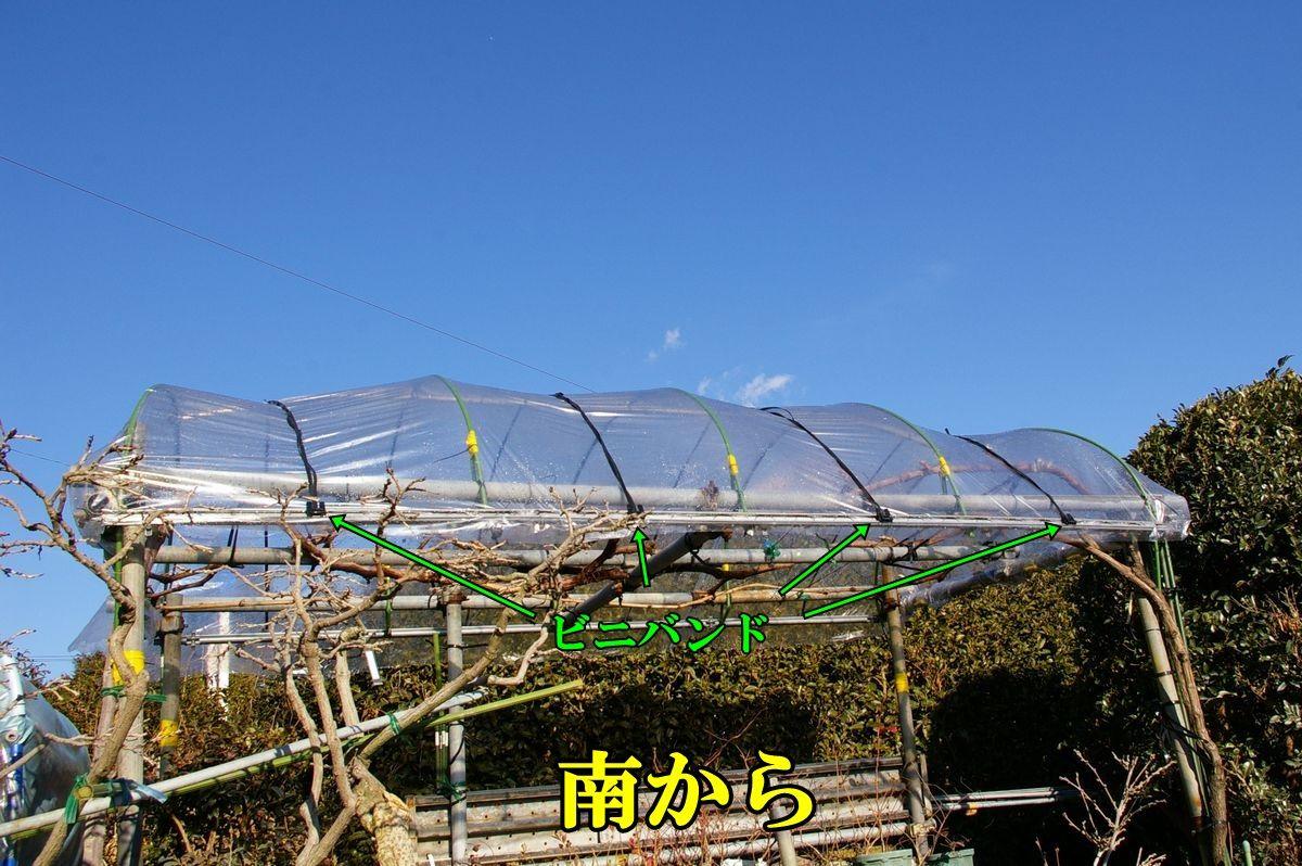 1G_hou0202c2.jpg