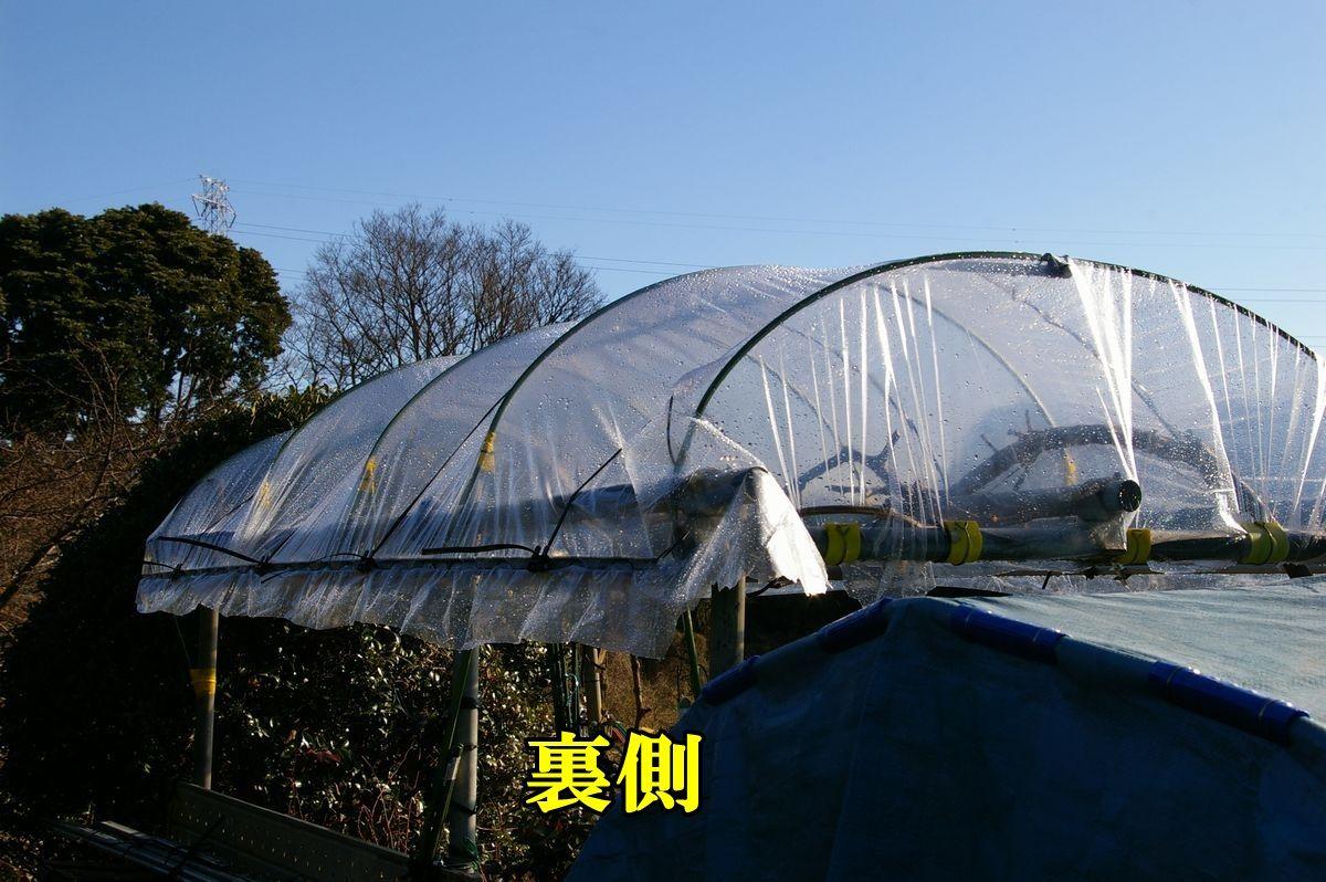 1G_hou0202c3.jpg
