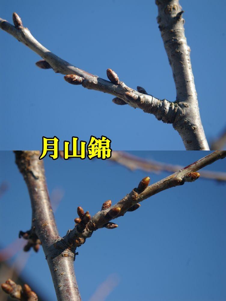 1G_nisik0110c1.jpg