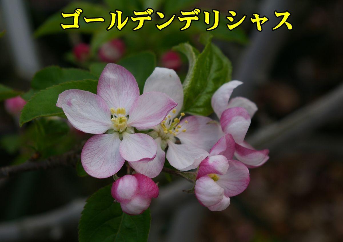 1Gdeli150404_029.jpg