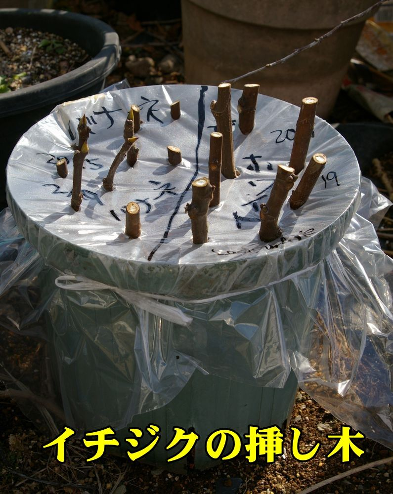 1I_sasiki0219_0c1.jpg