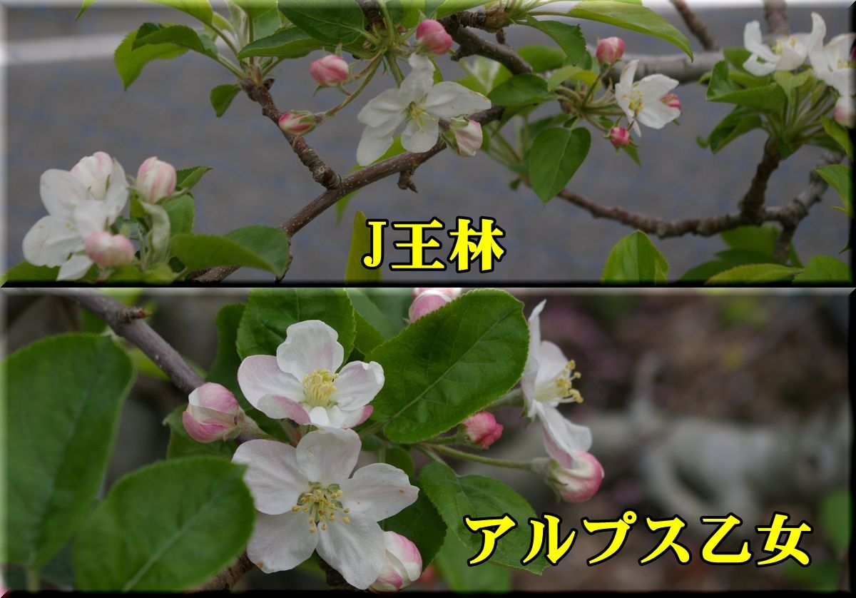 1Jou_ALo150410_027.jpg