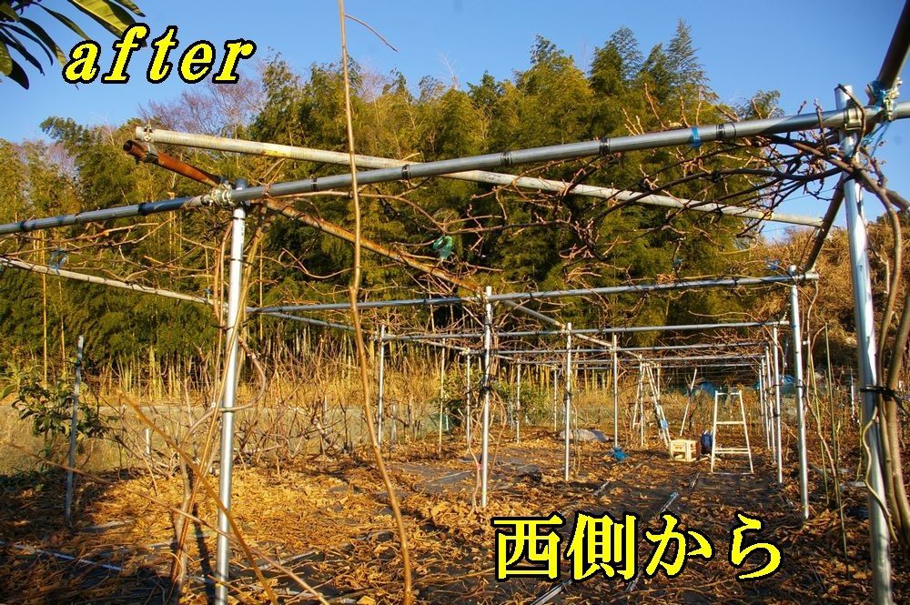 1K_after1226c1.jpg