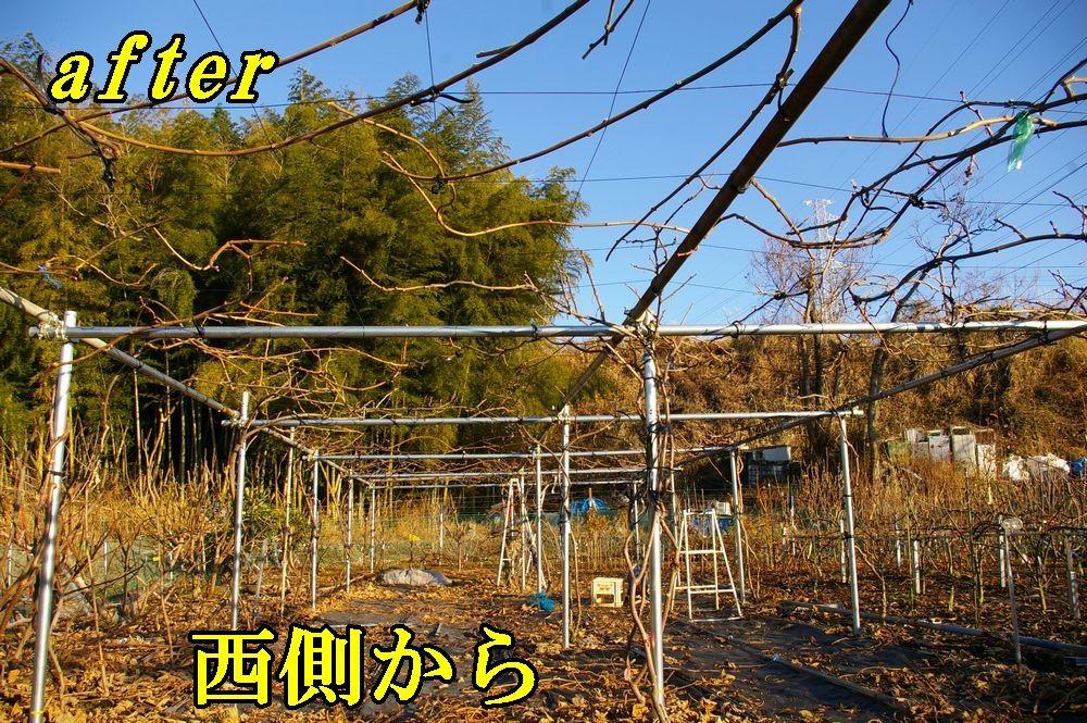1K_after1226c2.jpg