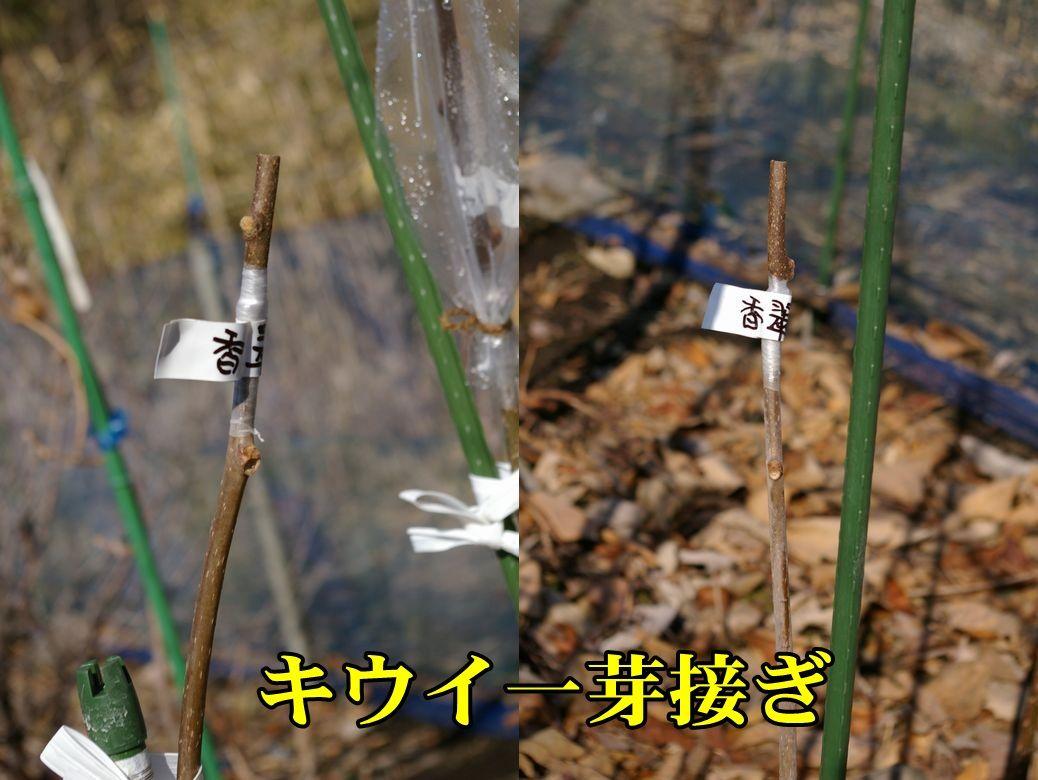 1K_kousui0206c1.jpg