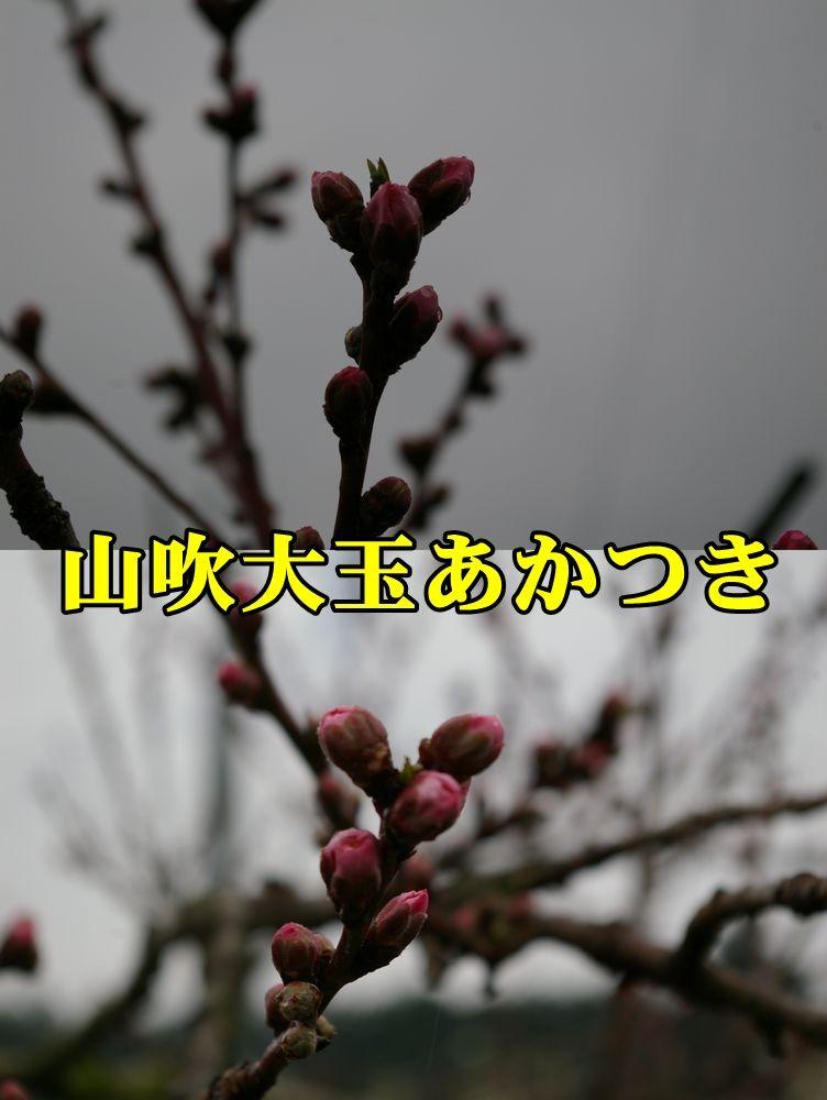 1M_akatuki150320_017.jpg