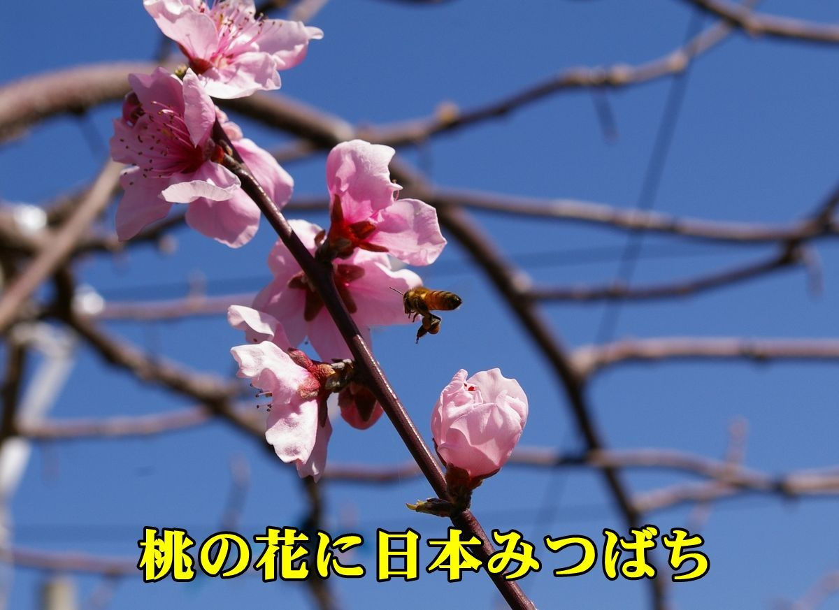 1M_ban_hati150326_001.jpg