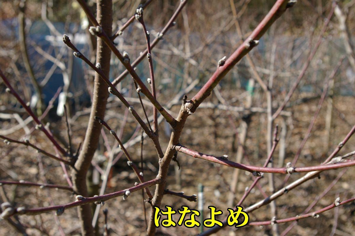 1M_hanayome0213_0c1.jpg