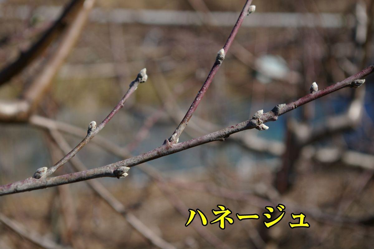 1M_haneyjyu0213_0c1.jpg