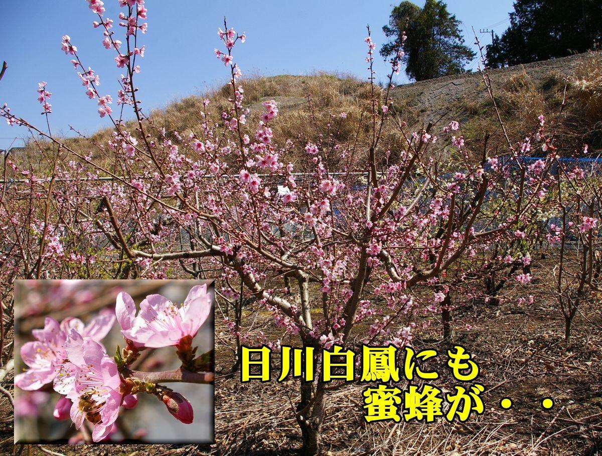 1M_hikawa150326_006.jpg