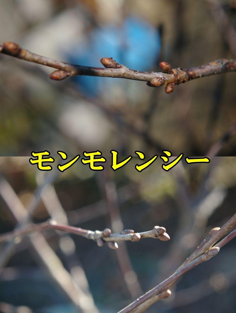 1M_lency0110c1.jpg