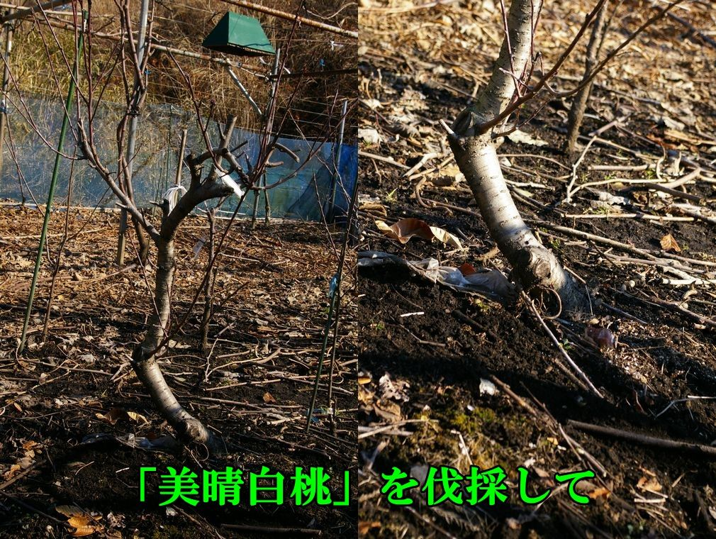 1M_miharu0120c1.jpg