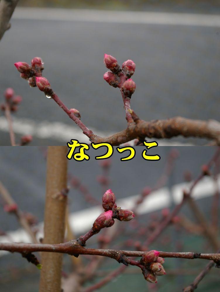 1M_natukko150320_014.jpg