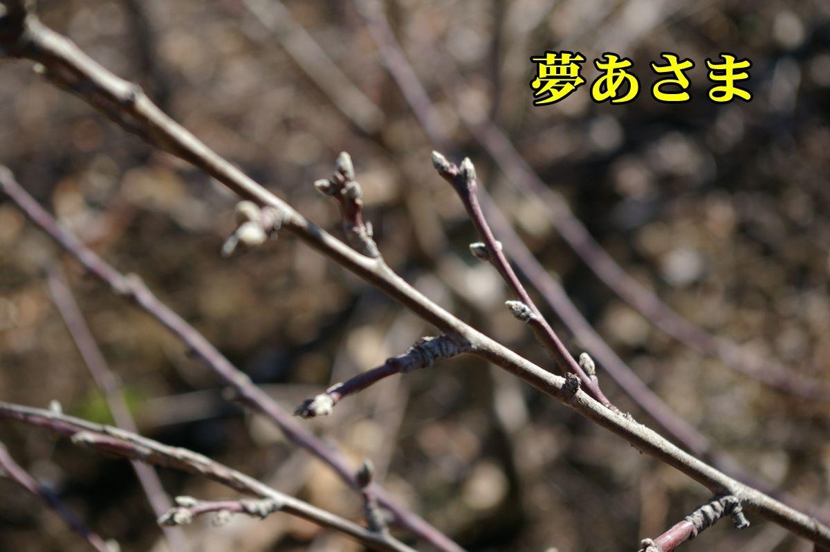 1M_yumeasa0213_0c1.jpg