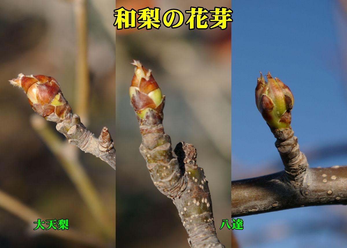 1N_daitenri0311_0c1.jpg