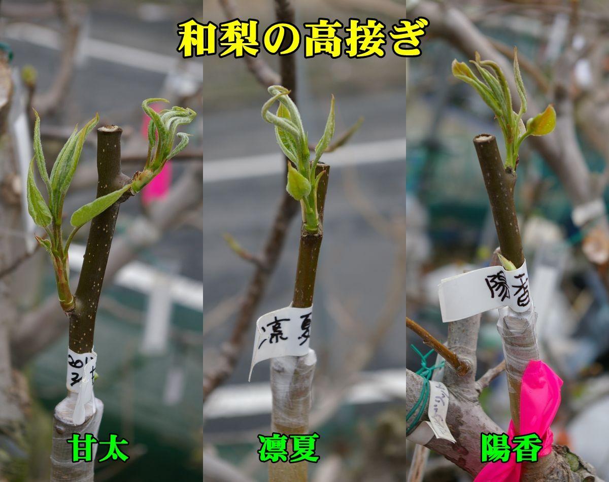 1N_kanRinYou150321_012.jpg
