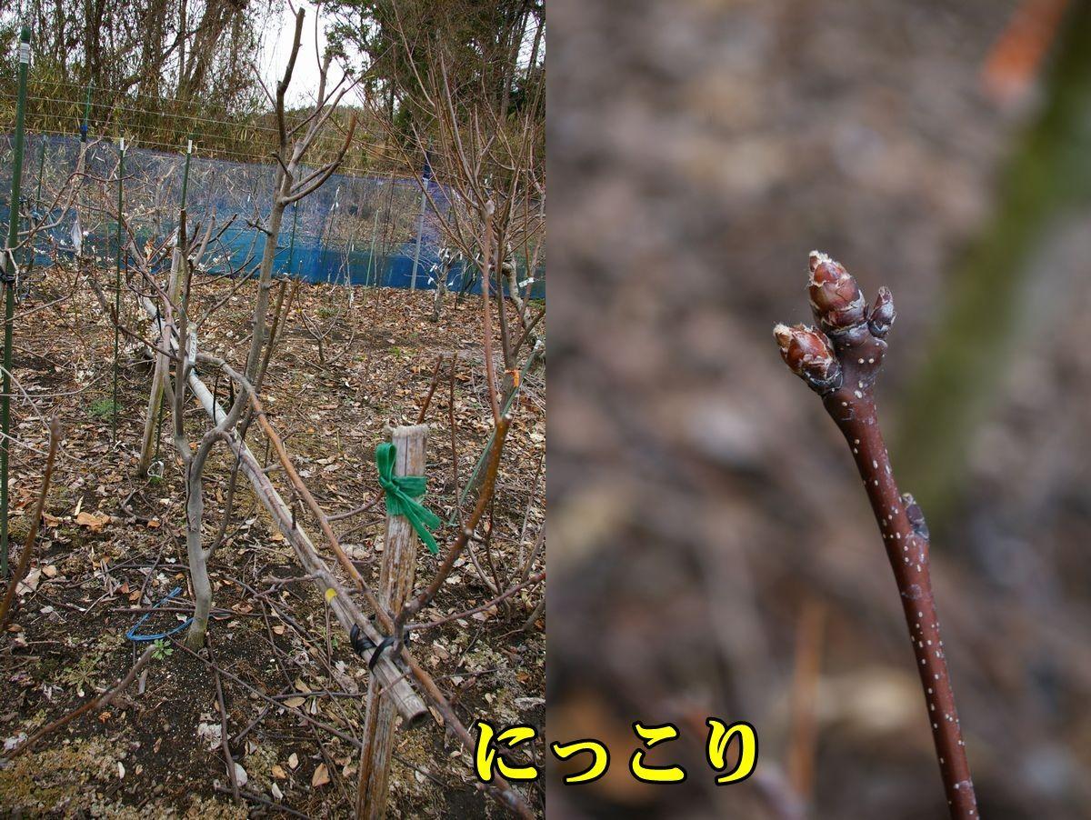 1N_nikkori0224_0c1.jpg