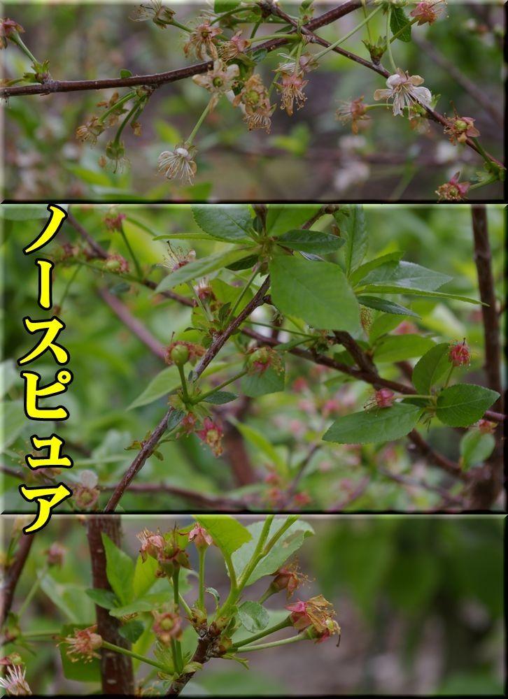 1N_pyua150429_001.jpg