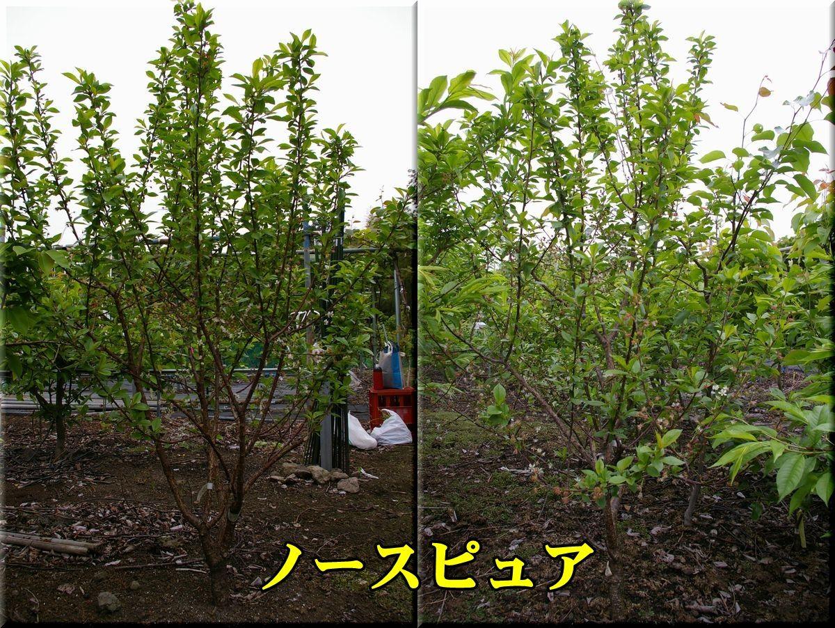 1N_pyua150429_002.jpg