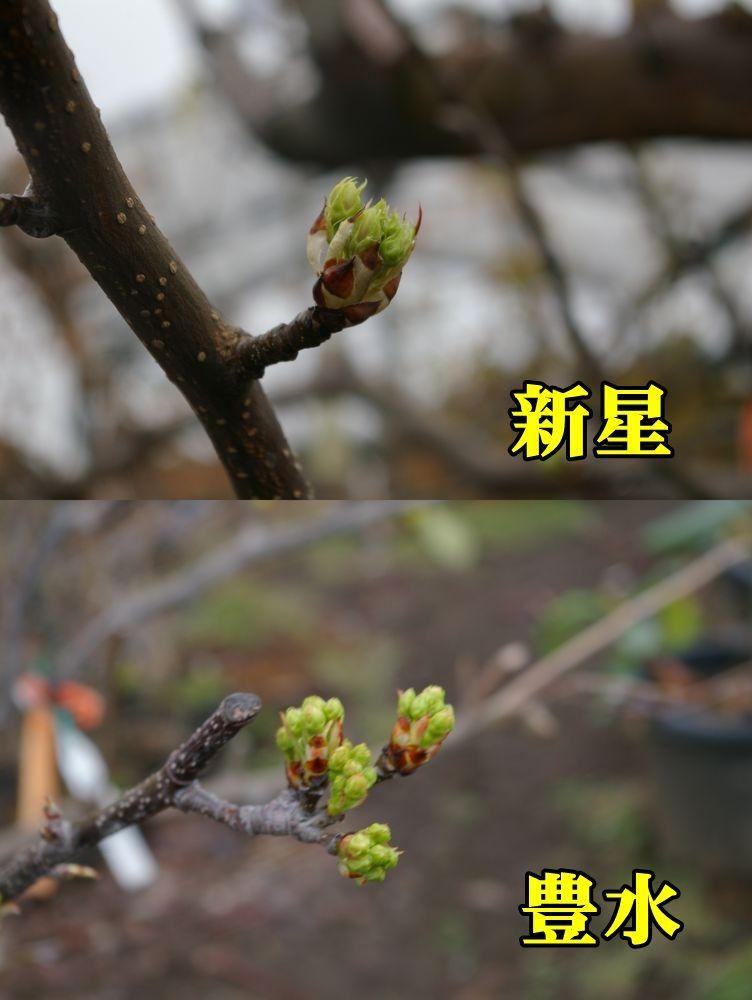1N_sinsei_hou150320_022.jpg