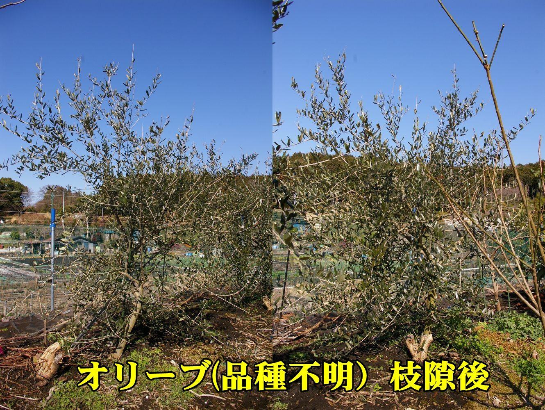 1O_A_fumei0227_0c2.jpg