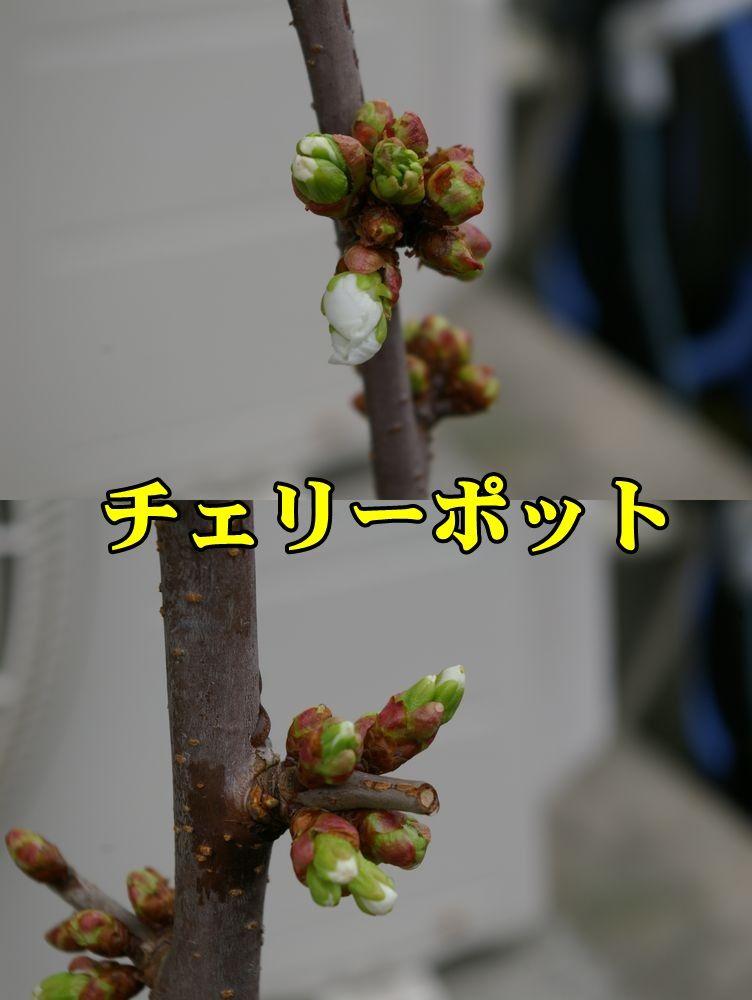 1O_cherypot150320_025.jpg