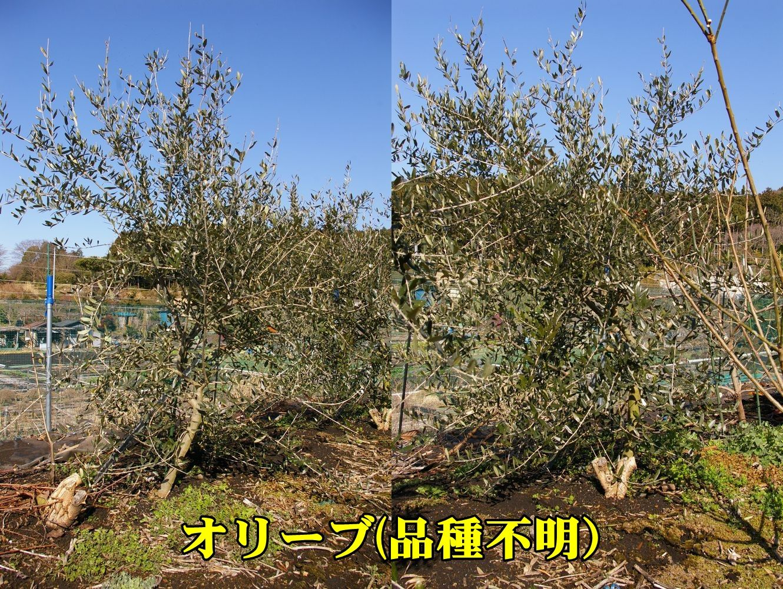 1O_fumei0227_0c1.jpg