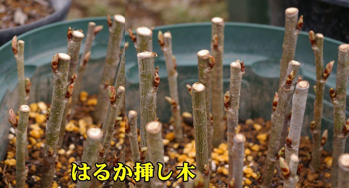 1O_haruka0303_0c1.jpg