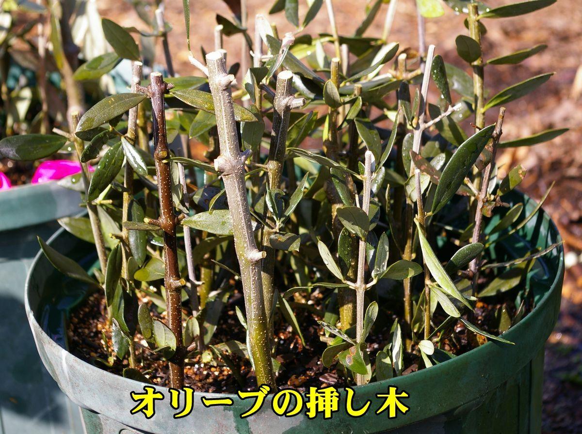 1O_sasiki0227_0c1.jpg