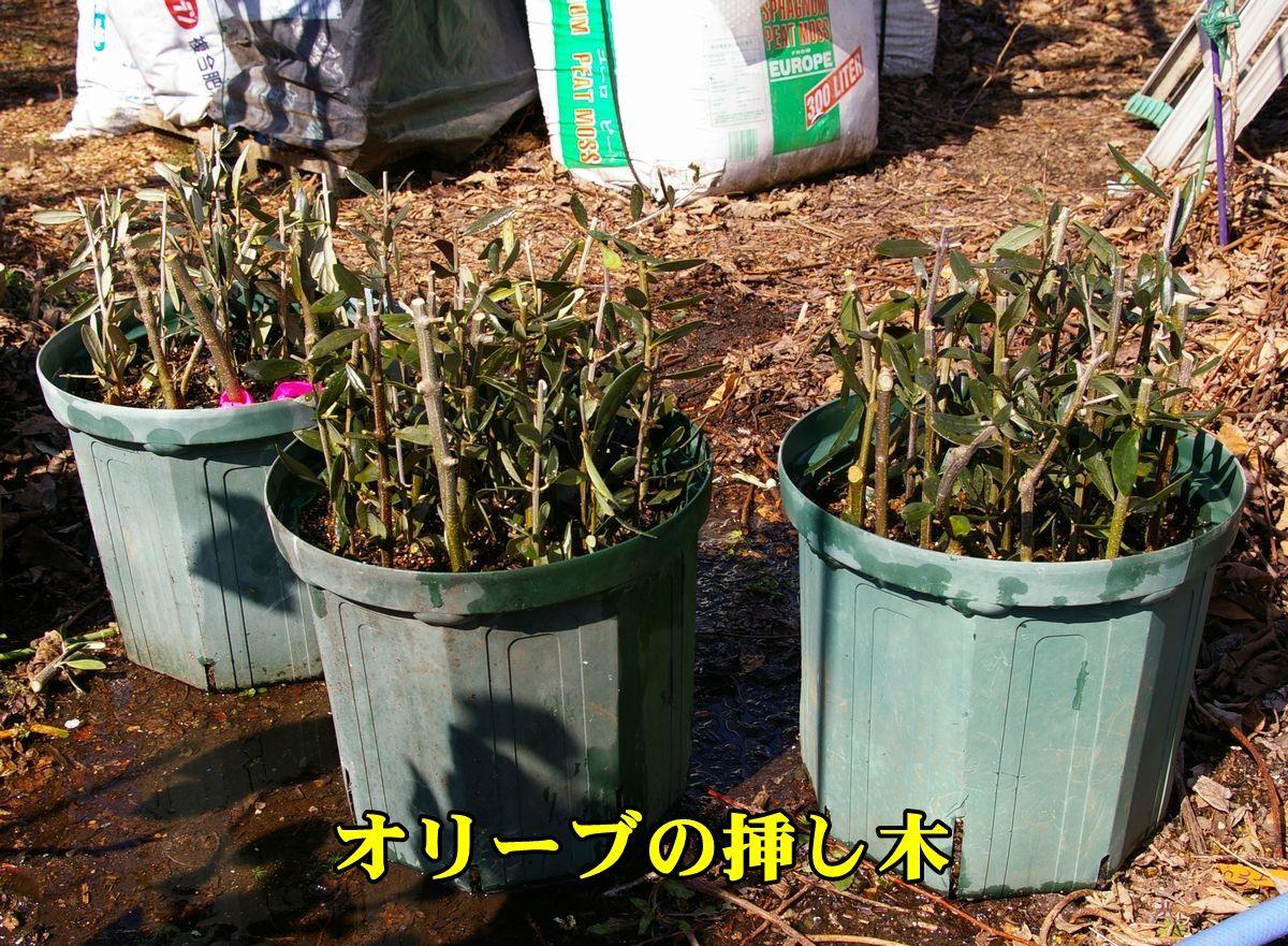 1O_sasiki0227_0c2.jpg