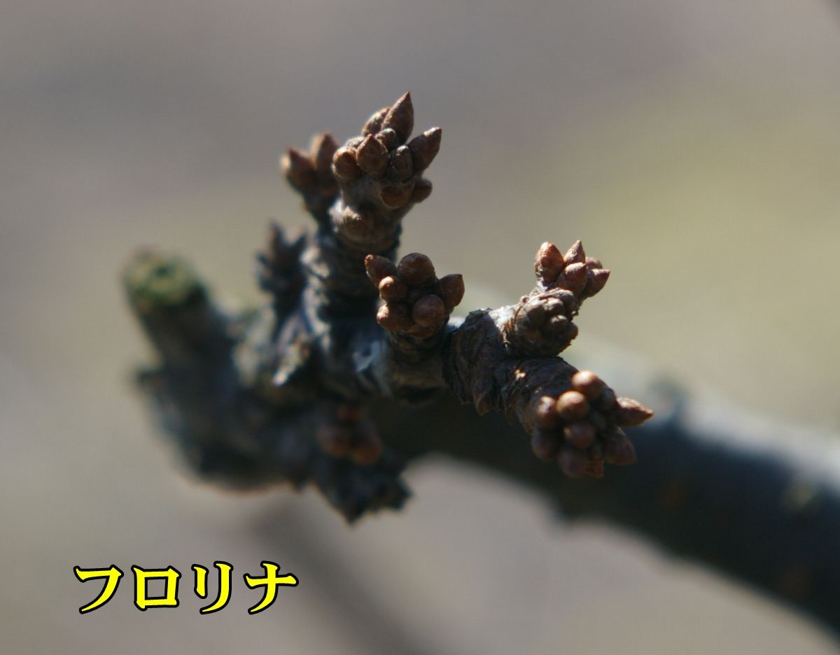 1P_frorin0210_0c1.jpg