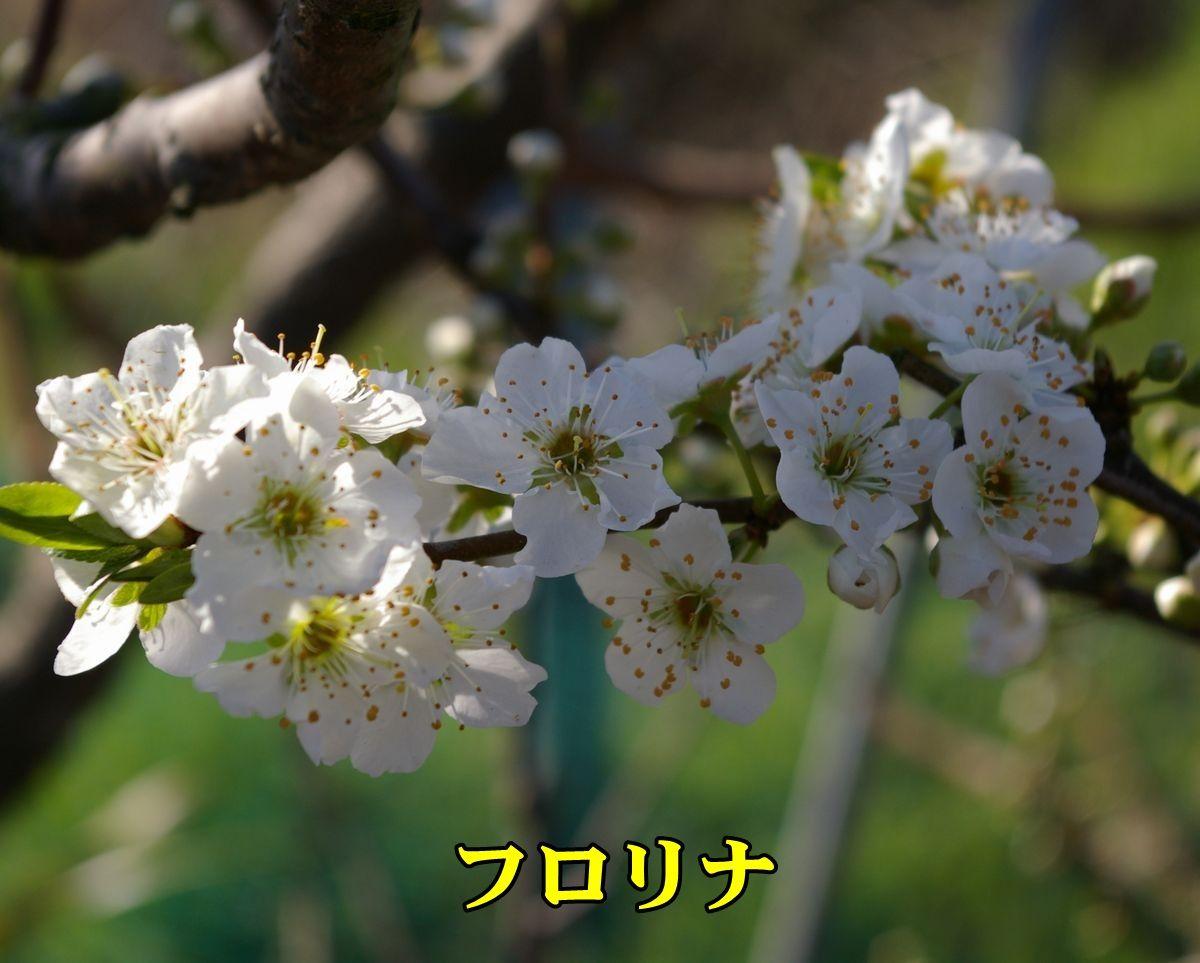 1P_frorina150324_008.jpg