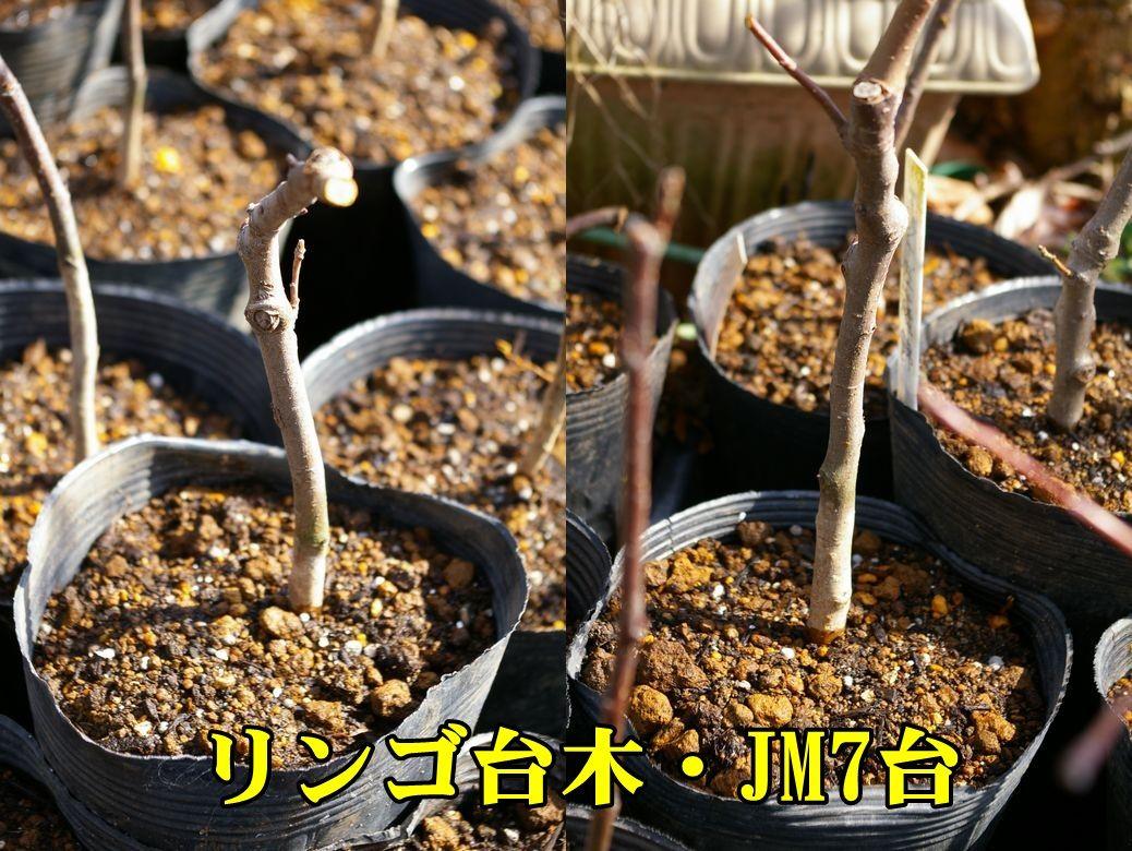 1P_jm0216_0c2.jpg