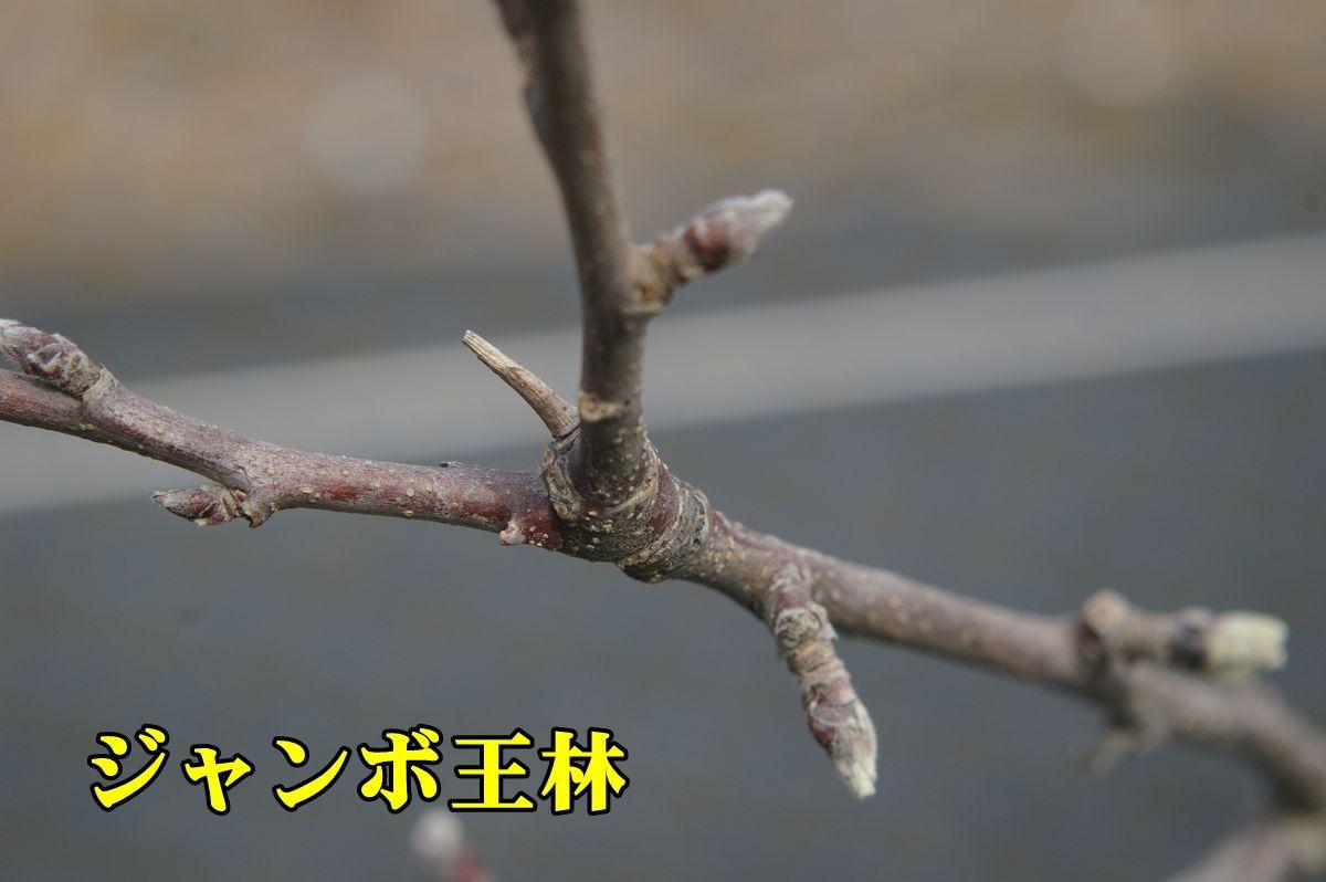1R_Jorin0218_0c1.jpg