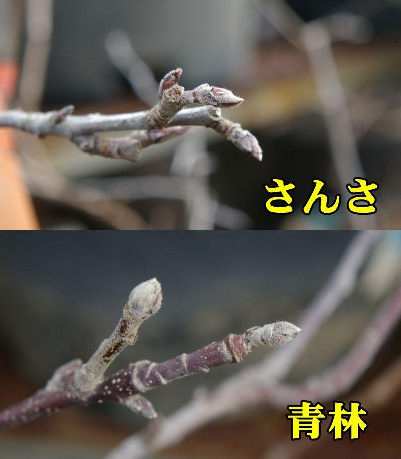 1R_sans_sei0218_0c1.jpg