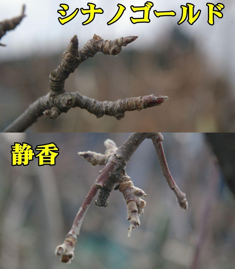 1R_sina_siz0218_0c1.jpg