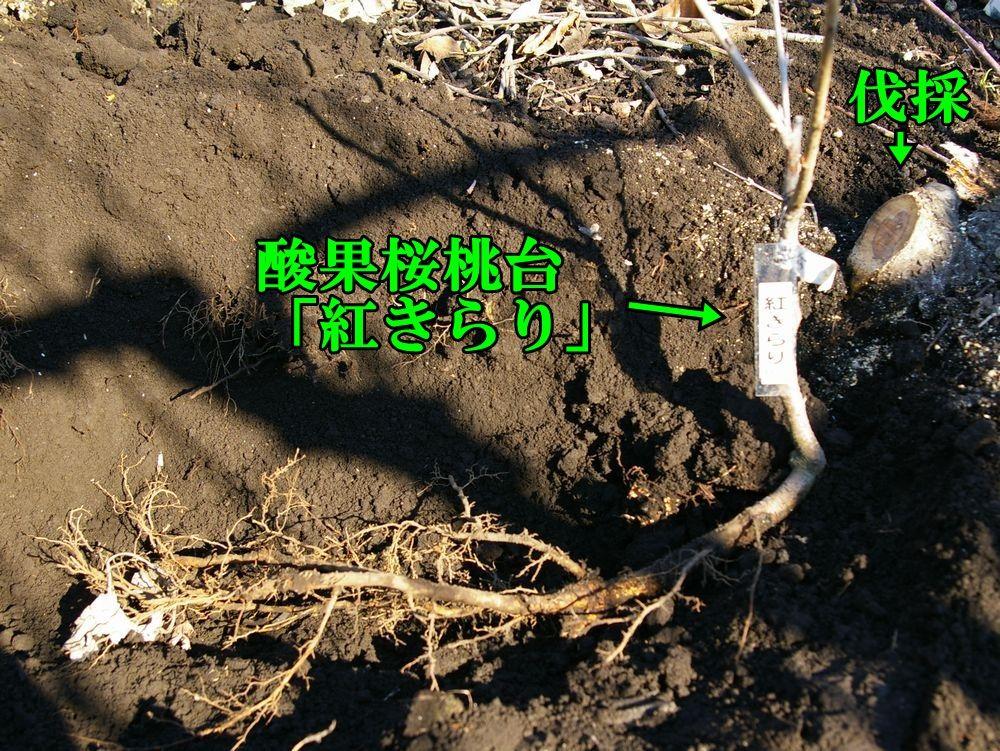1S2_beniki0120c1.jpg