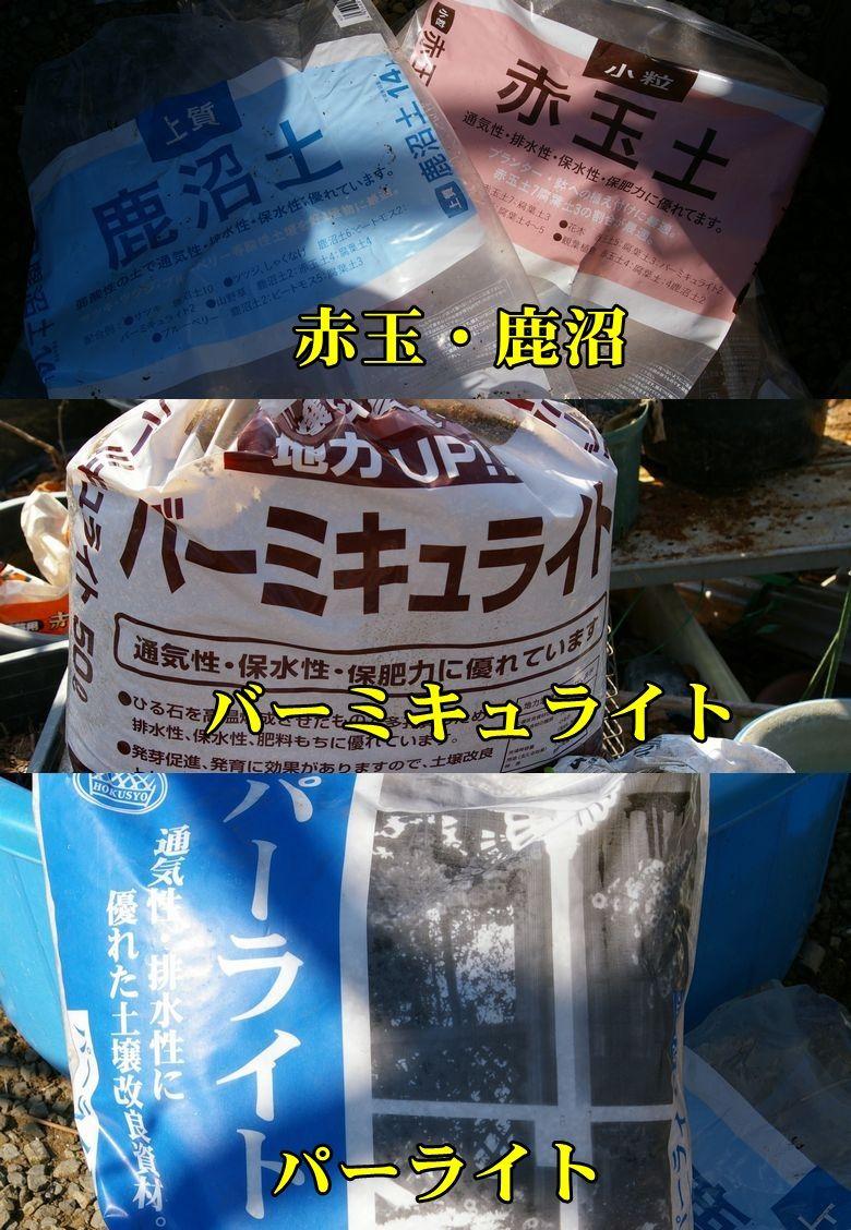1S_aka_kanu0215_0c1.jpg