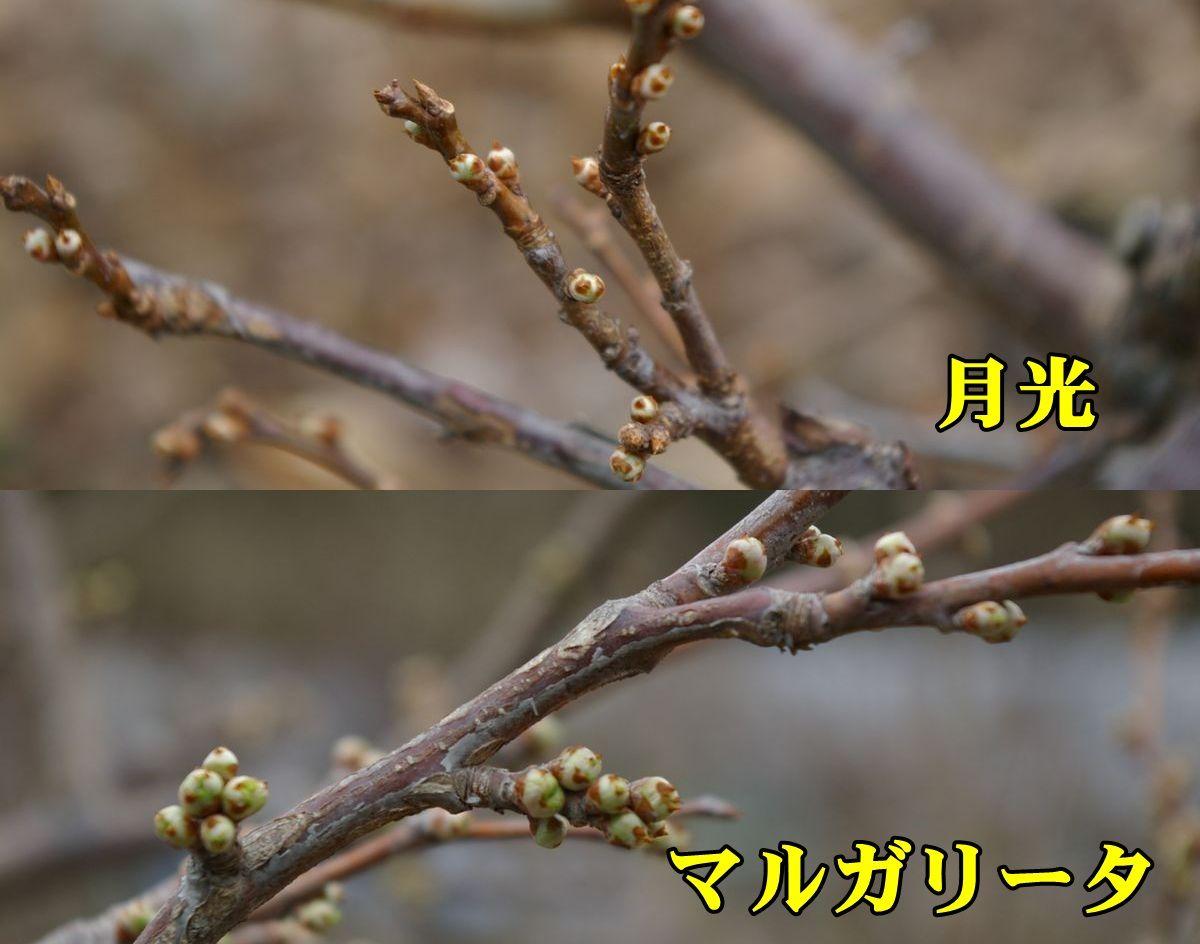 1S_gek_mar0224_0c1.jpg