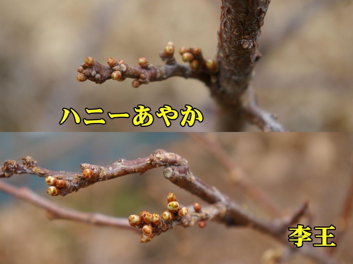 1S_haneya_rio0224_0c1.jpg